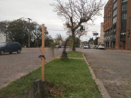 Plantio de árvores frutíferas e nativas pela cidade